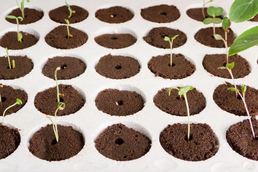 plants growing in pods in a indoor gardening kit