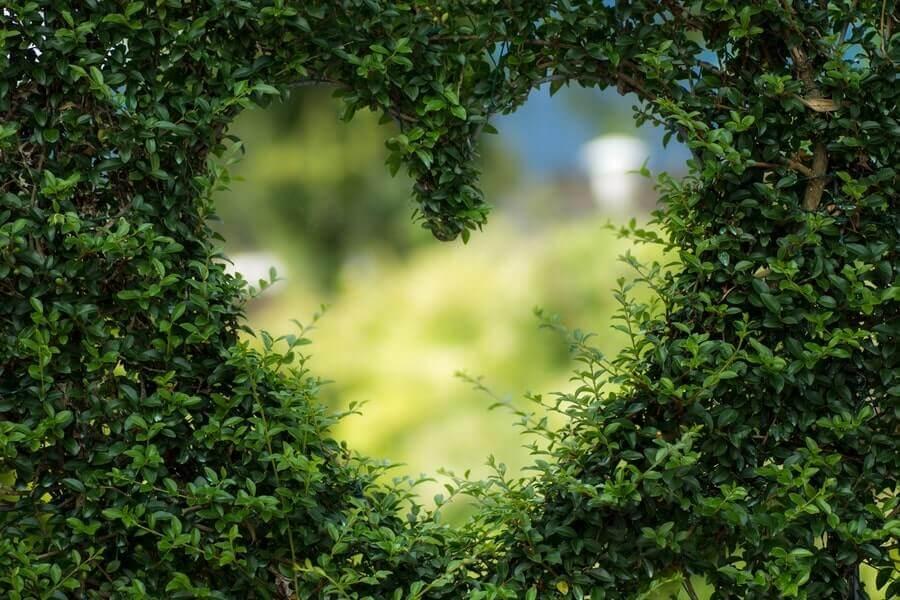 Close up of a bush with a heart shape cut
