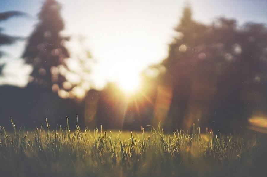 Lawn at sunrise