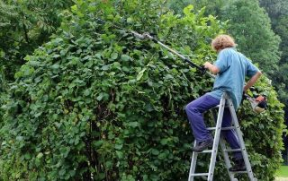 10 Best Gas Hedge Trimmers [year] - Reviews, Buyer's Guide + FAQs