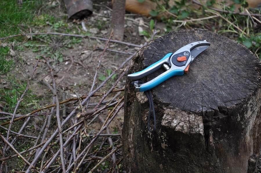 Pruning Sheers on a log