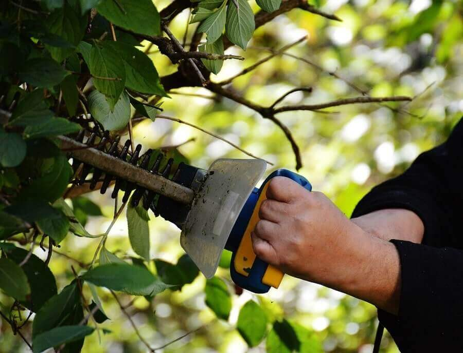 Trimming a bush with hedge trimmer