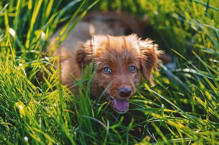 Adorable dog lying in grass