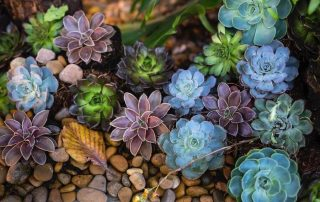 Top 5 Best Grow Lights For Succulents Reviewed (2020)