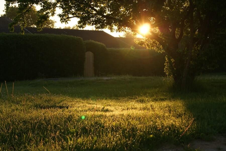 Backyard during sunset