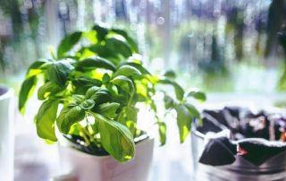 5 Best LED Grow Lights for Indoor Herbs in [year] + Guide