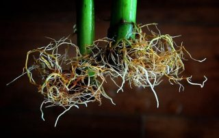 Best Hydroponic Nutrients 2020 - What Are They & How to Use Them?