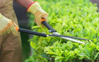 9 Best Hedge Shears 2020 for a Clean Cut + Buyer's Guide & FAQ