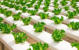 Hydroponics vs. Soil - Which is Better for Indoor Gardening?