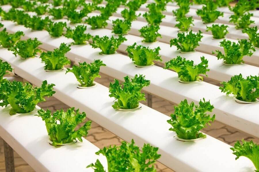 Greenhouse hydroponics system