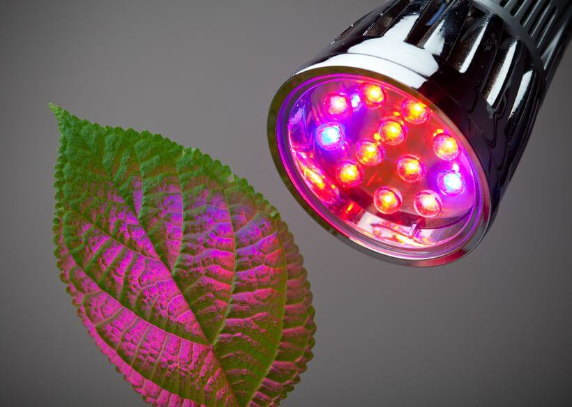 Led lights shining on a plant