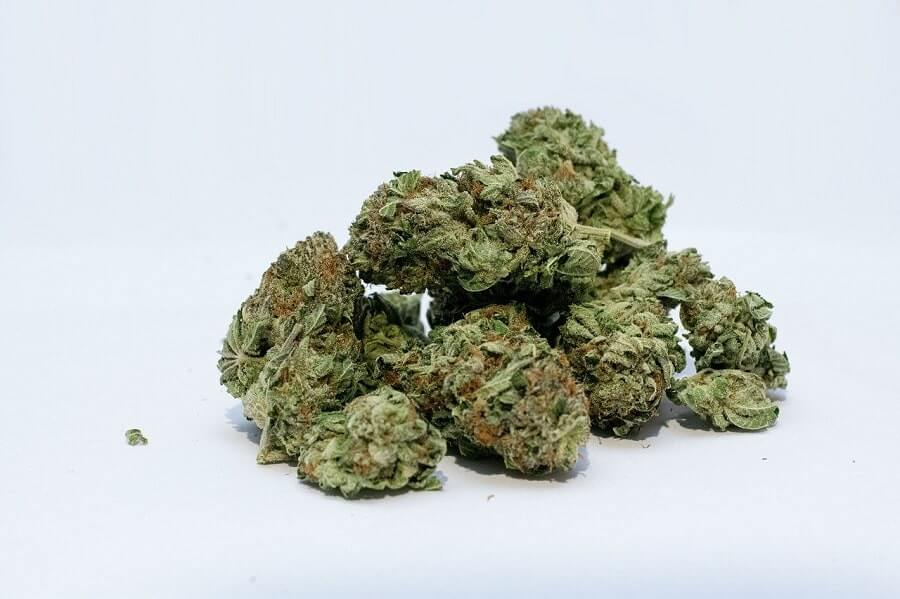 Marijuana buds on white background