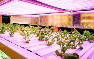 15 Best LED Grow Lights [year]: Begnner's Guide + Expert Tips