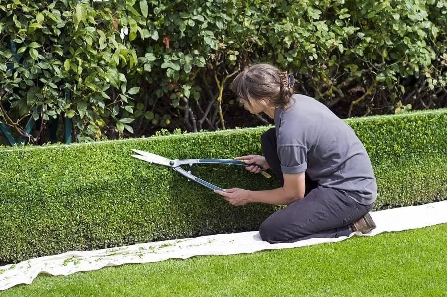 Topiary using hedge shears