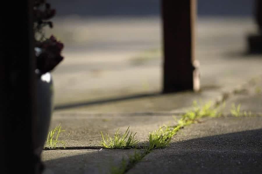 Weeds in driveway