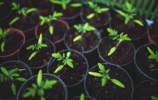 Guide to Successful Indoor Gardening (Beginner-Friendly Too)