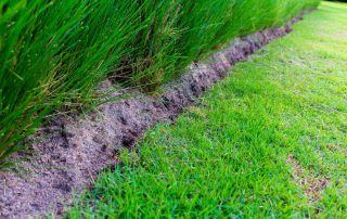 The 9 Best Weed Killers for Bermuda Grass Reviewed [year]