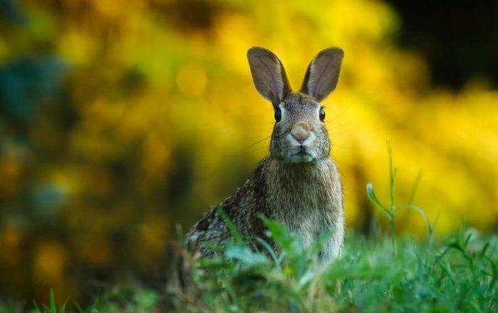Close up of rabbit