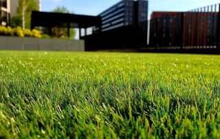 5 Lawn Mowing Tips 2020 for a Professional Looking Green Grass
