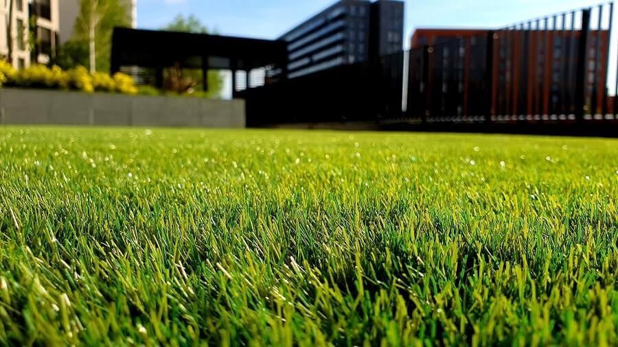 Green grass close up