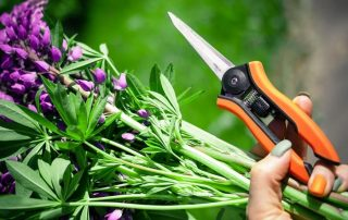11 Best Garden Shears 2020 for Cutting Grass or Other Yard Work