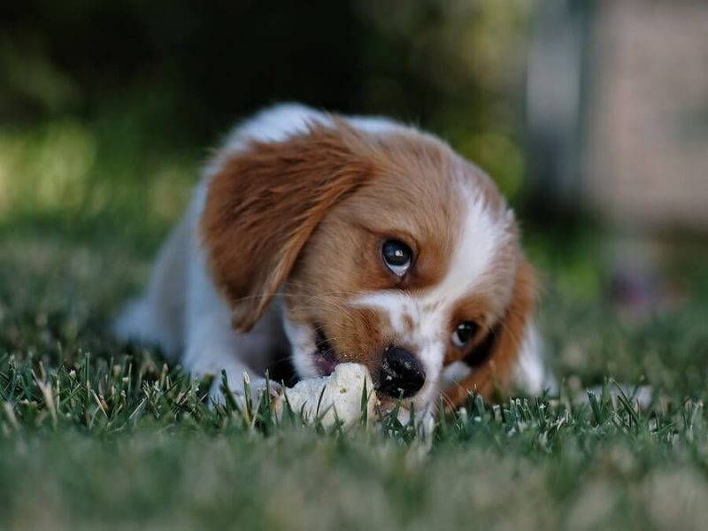 How Long to Keep Dog Off Grass After Weed Killer Usage