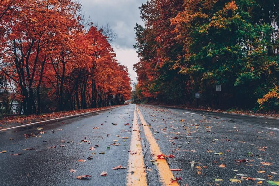 Autumn leaves alongside a road