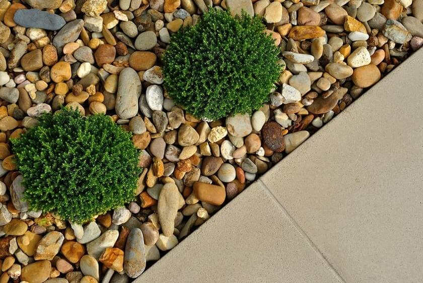 Plants surounded by decorative stones