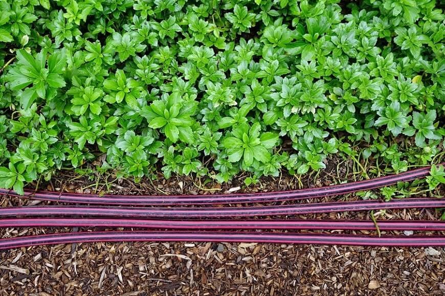 Garden hose on mulch