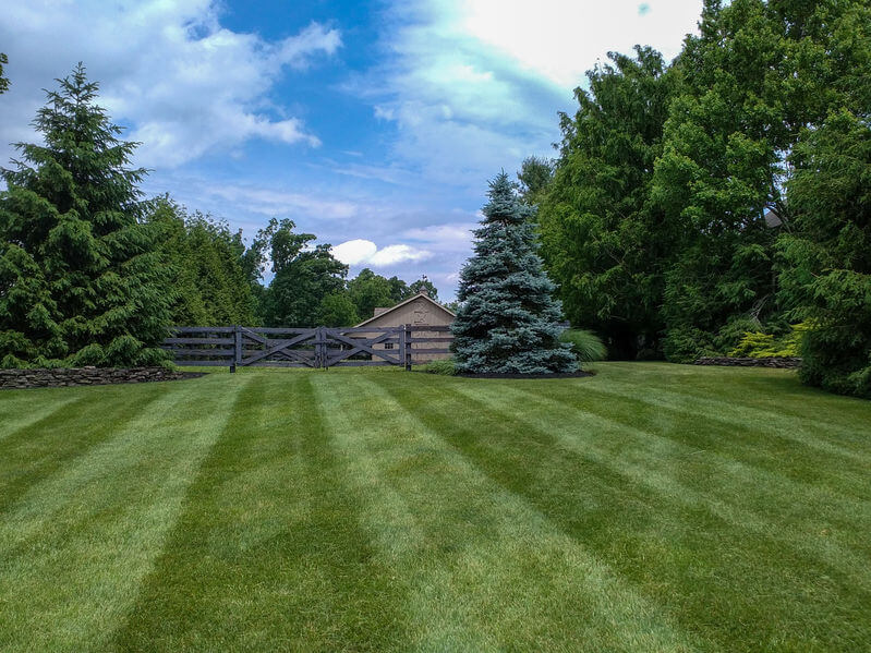 a freshly mown lawn with stripers and a barn in the background