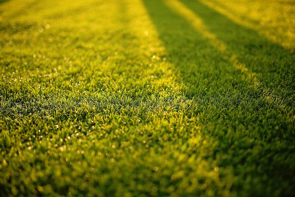 backyard lawn in sunset