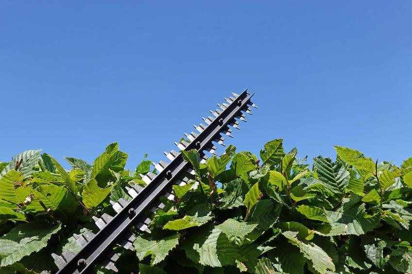 blade of hedge trimmer