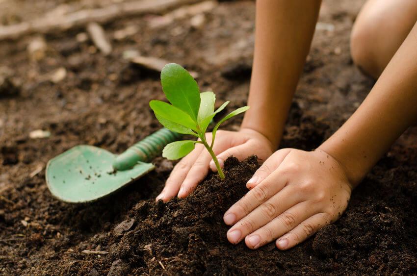 closeup kids hands planting in garden