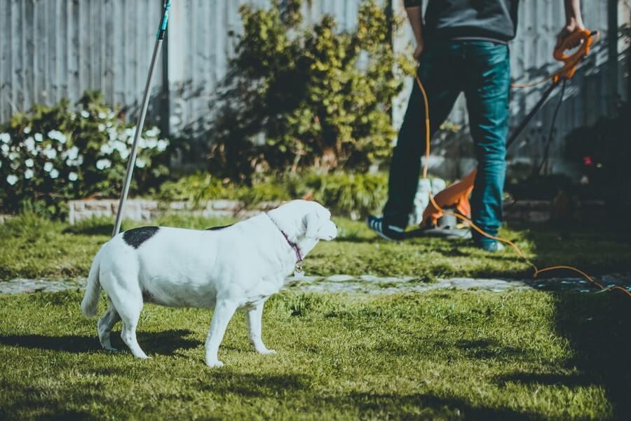 dog on green grass beside a man holding electric grass cutter