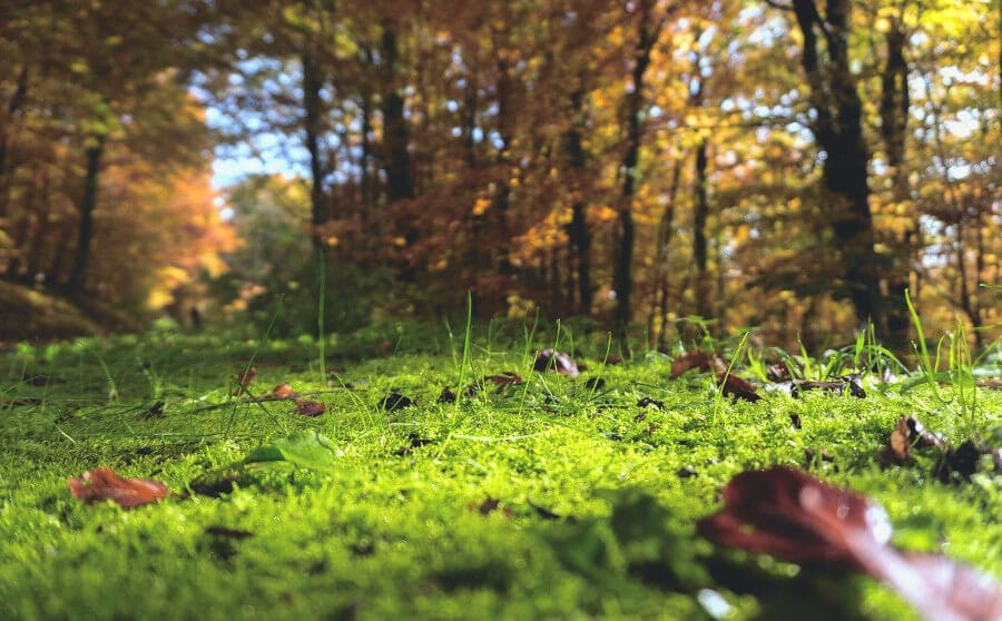 forest floor with moss grass