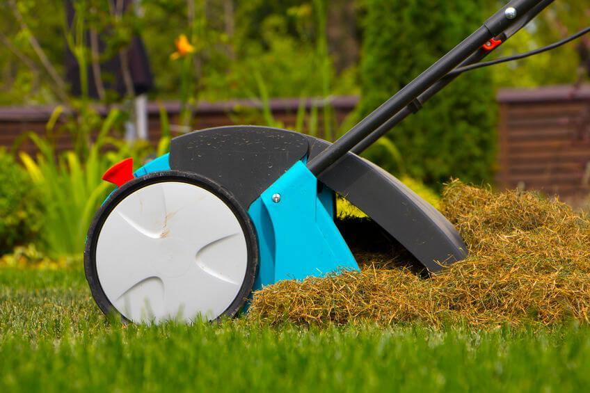gardener operating lawn dethatching machine
