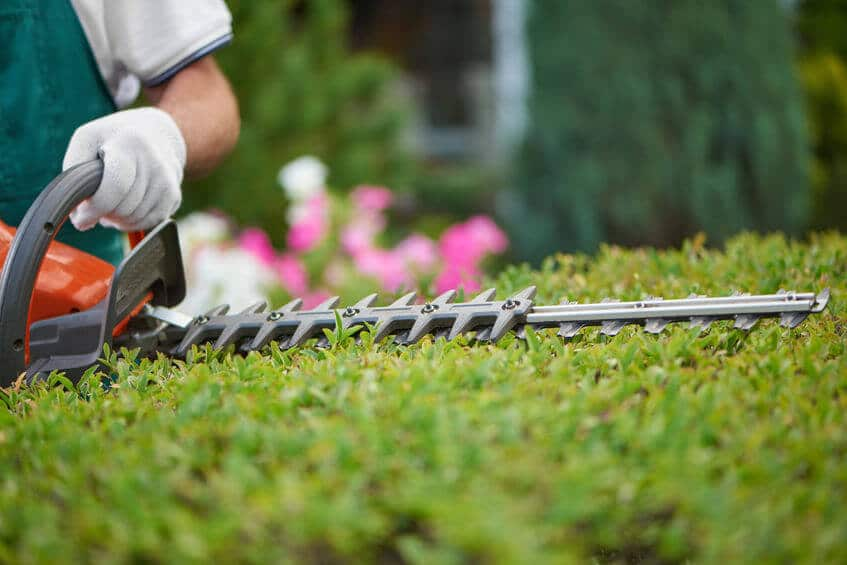 gardener with hedge trimmer closeup