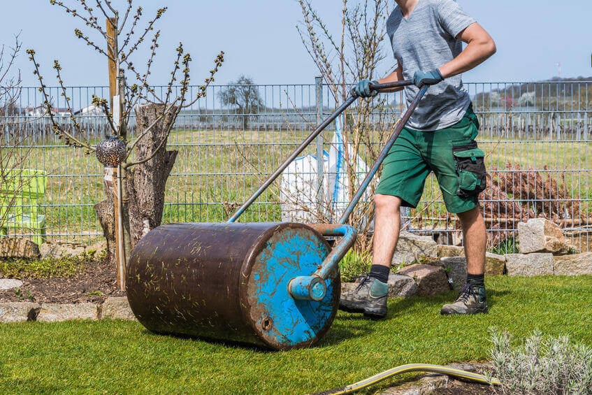 gardener working with a lawn roller