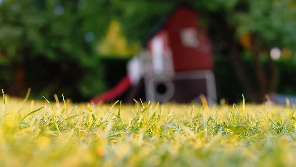 grass lawn in sunlight closeup