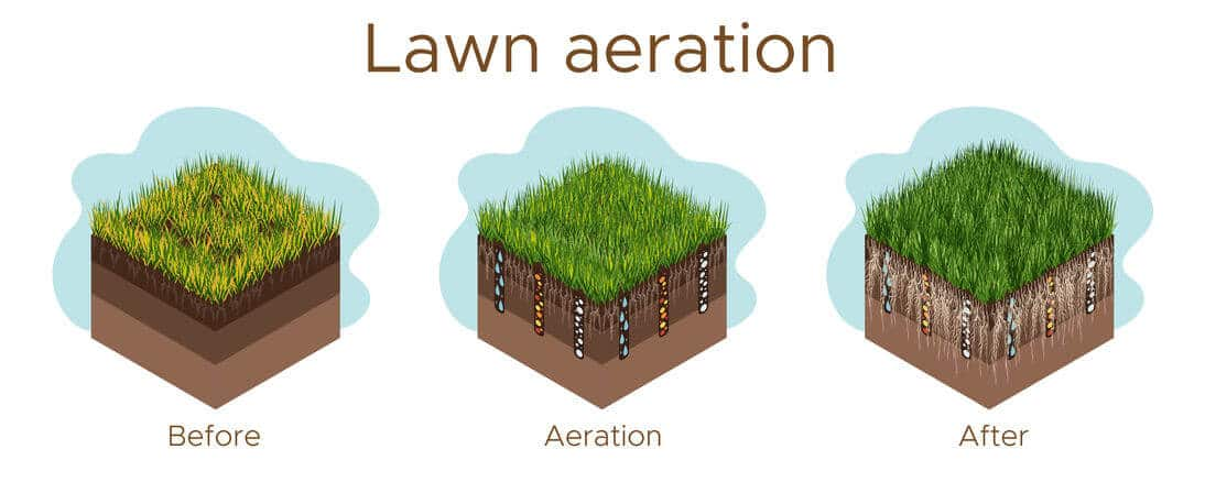 lawn aeration vector before and after