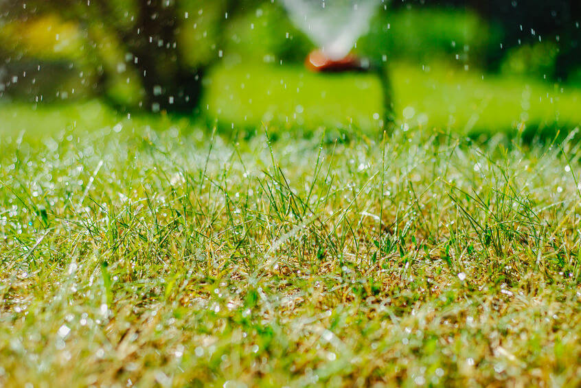 lawn being watered in closeup