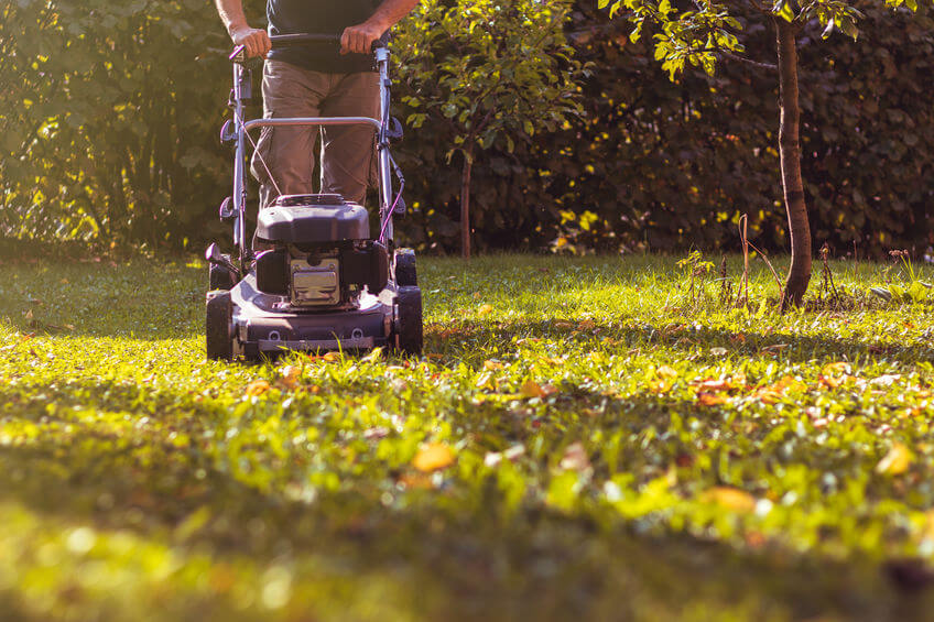mowing and mulching the grass with a lawn mower at early fall