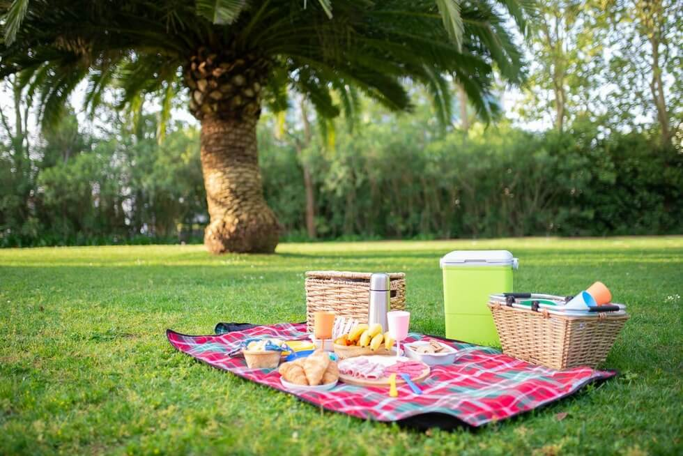 picnic on a green lawn with palm tree
