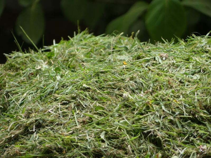 pile of grass clippings