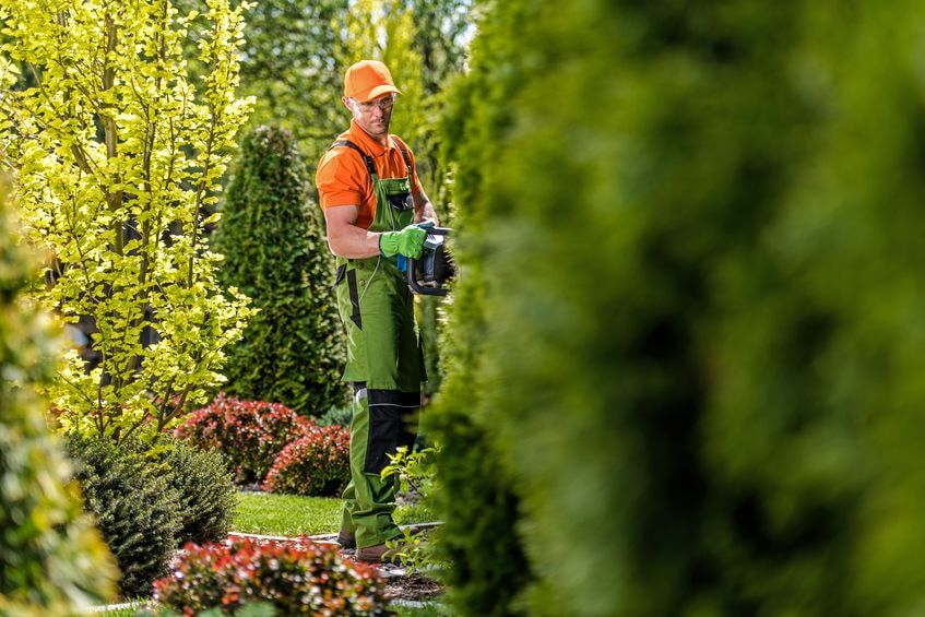 professional gardener working with hedge trimmer