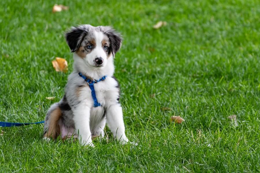 puppy on green grass lawn