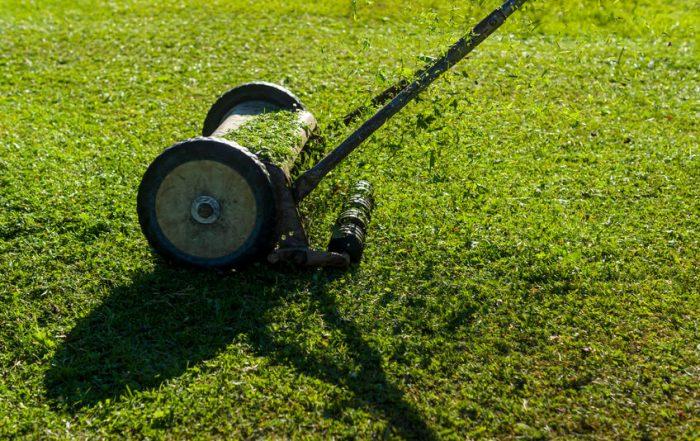reel mower on green lawn