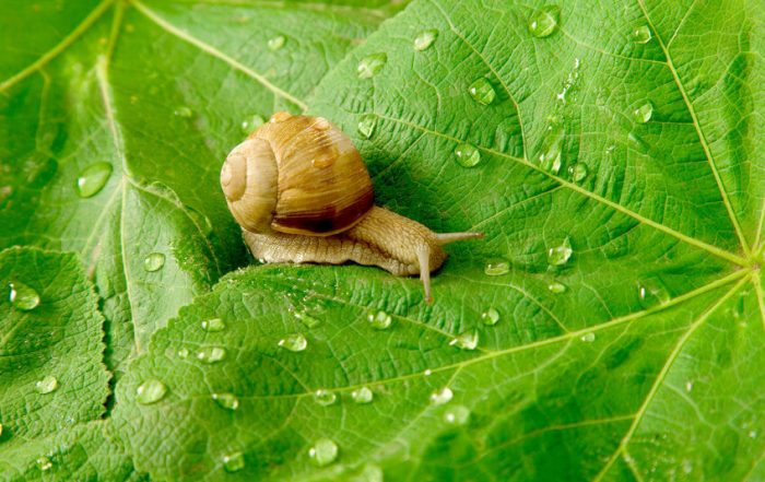 snail in garden close up
