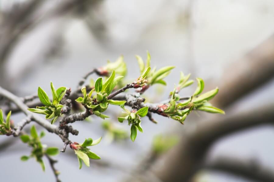 tree sprout growing with green leaves