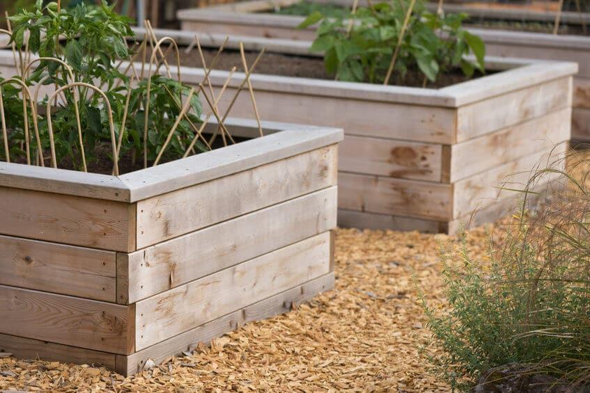 vegetables in raised garden beds